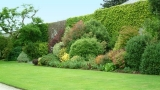 Mixed hedge plants