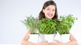 Aromatic plants for indoors