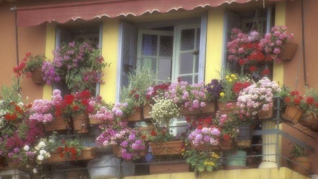 Fragrant plants on the balcony