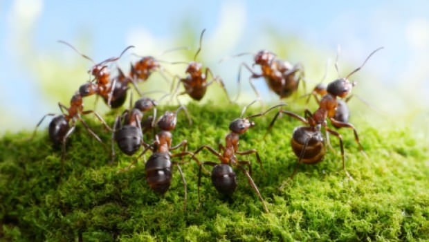 Anti ants solutions